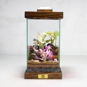 گیاه تراریوم شماره 8 - گلفروشی آنلاین VIP Shop
